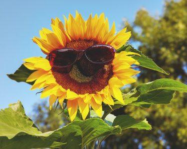 頭皮にも日焼け対策は必須!紫外線による髪のトラブルとUVケアを要チェック